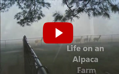 Typical Farm Visit
